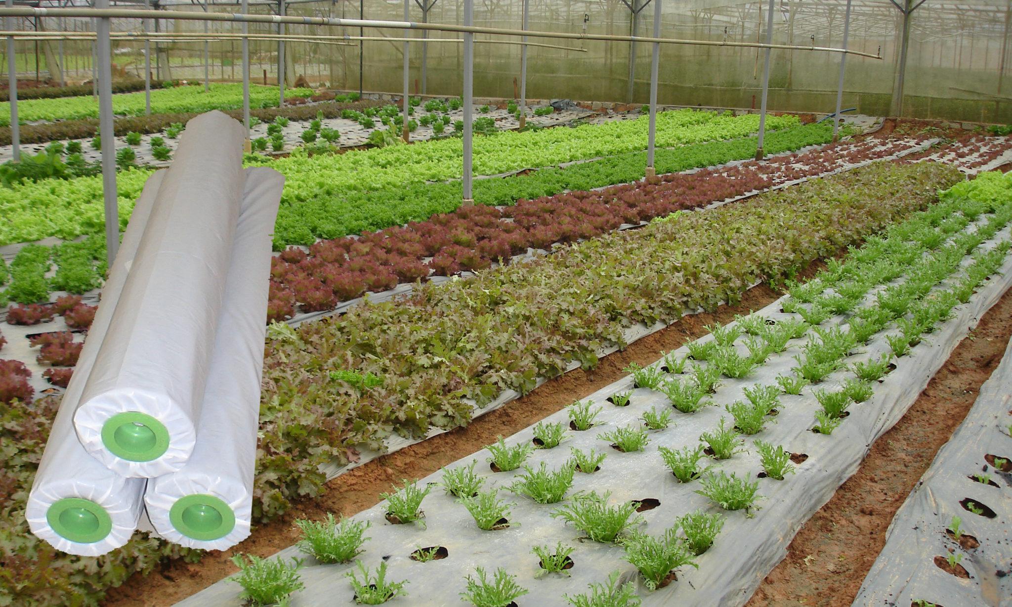 màng phủ nông nghiệp giá rẻ nhất